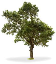 Holz - Nachhaltiger Rohstoff