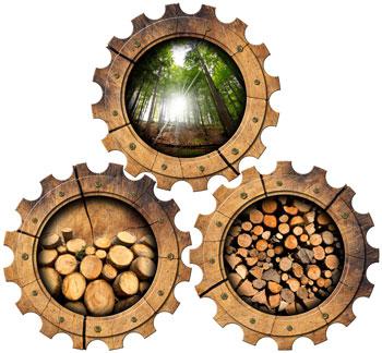 Holz - Der Alles-Könner